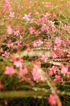 Sparkling Floral Sunrise - Flower Photo Print by Mademoiselle Mermaid, $7.00