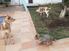 Ratos en casa con Benita, George, Richie, Brown y Chico 01/17