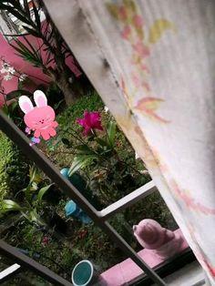 My tiny Heaven Blooming all the way💚💚💚 #blessed #cattleya #garden #gardening #gardeninglove #green #greenbeings #greenlife #laviniafenton #fentonsmagicalyard #cixispinkheaven Green Life, All The Way, Blessed, Heaven, Bloom, Yard, Gardening, Plants, Pink