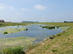 Fietsen in de omgeving van Biesbosch, Noordwaard Polder, Werkendam, Hank, Drimmelen, Dordrecht