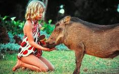 Image result for warthogs VIDEO Horses, Animals, Image, Animales, Animaux, Horse, Animal Memes, Animal, Animais