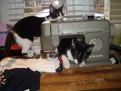 Kitty cat sewing party!