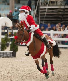 Christmas Horse Tack.14 Best Christmas Horse Stuff Images Christmas Horses