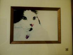 Model kitty