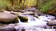 BrushyBrashyBabbleBrook Brandy Creek.  One of the feeds to whiskeytown lake.. ahhhhhh :)