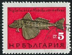 Bulgaria (circa 1965) - #stamp printed by Bulgaria, shows Black Sea Fish, Gurnard (...)