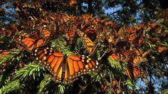 Globe Backyard: Wings of Life Trailer and Louie Schwartzberg