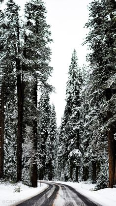 Beautiful winter travel photography, Winter woods, Winter road trip, Winter photography inspiration, photography inso - beautiful photography travel winter woods - New 645703665310814809