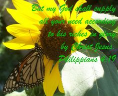 sunflower and butterfly by The Bible Thumper, via Flickr