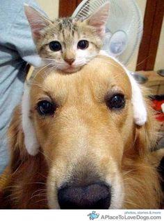 i would like a kitten hat!