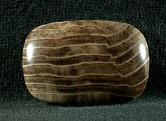 Petrified Wood Freeform Cabochon from Nevada