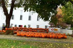 Fall day. Woodbury Ct