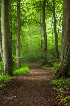 """silvaris: """" Forest path by Henrik Hansen """" Forest Path, Tree Forest, Forest Trail, Forest Scenery, Beautiful Forest, Beautiful Places, Walk In The Woods, Pathways, Beautiful Landscapes"""