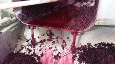 vinification nero d'avola