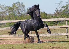 Horses ‹ Auchter Photography