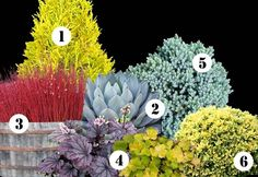 color for shade garden | ... landscape plan this year & ideas for year-round color in your garden