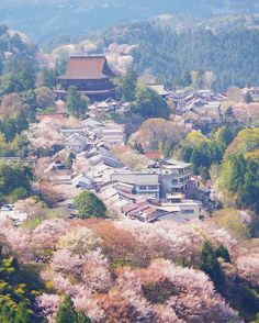 Mt. Yoshino, Nara, Japan, World Heritage, 吉野山, 奈良, 日本, 世界遺産, sakura, cherryblossom