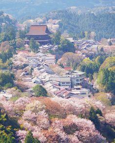 Mt. Yoshino, Nara, Japan, World Heritage, 吉野山, 奈良, 日本, 世界遺産, sakura, cherryblossom
