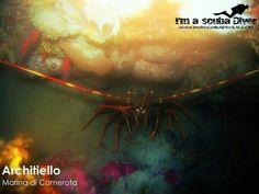 www.imascubadiver.com #aragosta #immersioni #scubadiver #architiello #marinadicamerota #palinuro