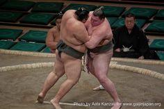 #Sumo en plein combat