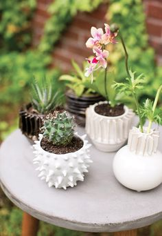 Inspiration shoot with cacti and succulents . . .