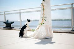 Homemade Bridal Dog Leashes - This DIY Dog Leash Makes Pets of Honor Look Extra Festive at a Wedding (GALLERY)