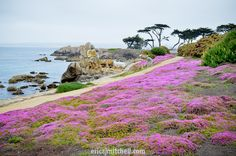 Lover's Point in Pacific Grove, California...one of my favorite places on earth!