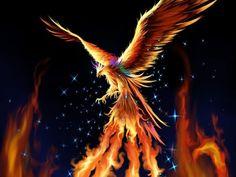 Phoenix - fantasy Wallpaper