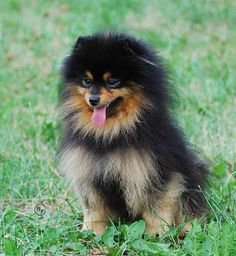 I'll hopefully get a cutie like this next month!!! <3