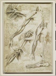 Leonardo da Vinci:Anatomist
