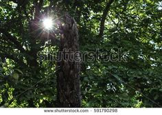 Spotlight Tree