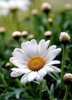 Красивые вещи (Oldschool) — Картинки из тем | OK.RU #gardeningflowers