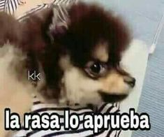 Man Humor, Girl Humor, Super Memes, Memes In Real Life, Memes Funny Faces, Spanish Humor, New Memes, Relationship Memes, Derp