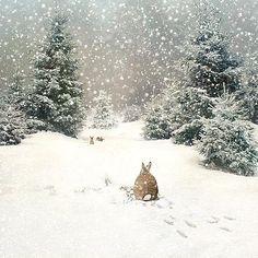 Christmas Landscape, Winter Landscape, Christmas Scenes, Christmas Art, Christmas Bunny, Christmas Pillow, Christmas Decorations, Landscape Illustration, Illustration Art