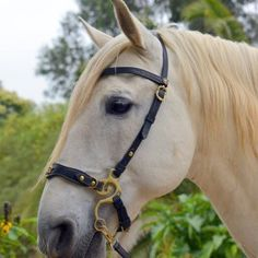 Elegant baroque style hackamore handmade from best quality vegetal tanned leather.