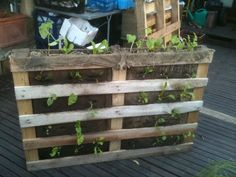 Cheap way of implementing a green wall system