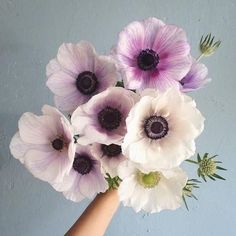 Anemone Bouquet From The Ground My Flower, Fresh Flowers, Spring Flowers, Beautiful Flowers, Anemone Flower, Prettiest Flowers, Anemone Bouquet, Bunch Of Flowers, Lavender Flowers