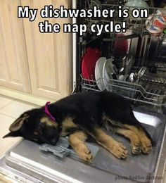 My dishwasher is on the nap cycle!