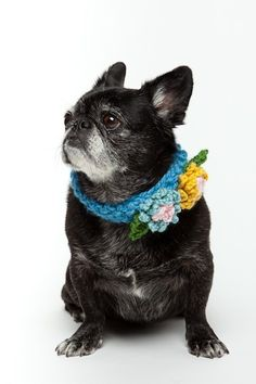 Floral Crochet Dog Collar.