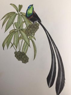 #DaisyFletcher #Birdtopia Daisy, Art, Craft Art, Daisy Flowers, Daisies, Kunst, Gcse Art, Bellis Perennis, Art Education Resources