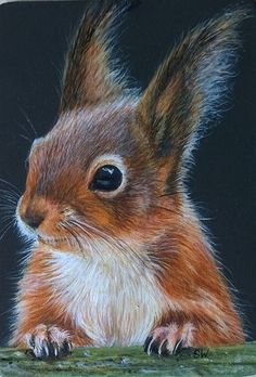 Broche Animaux - - süße tiere -- Broche Animaux - - süße tiere - ACEO OE Giclee Print Bunny Rabbit Melody Lea Lamb Abert's squirrel (or tassel-eared squirrel) (Sciurus aberti). A New Beautiful Day Begins Squi. Squirrel Art, Cute Squirrel, Squirrels, Squirrel Pictures, Animal Pictures, Forest Animals, Woodland Animals, Animal Paintings, Animal Drawings
