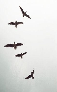 large photography print birds on a wire black and white photography fine art photography birds Birds In The Sky, Birds In Flight, Wildlife Photography, Flying Photography, Animal Photography, Bird Art, Bird Feathers, Belle Photo, Beautiful Birds
