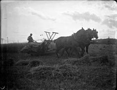Cultural Heritage Ireland - www.culturalheritageireland.ie  Image of a farmer harvesting with a corn binder drawn by 3 horses about 1900. Photo by J.J. Clarke, from the NLI Coll. CLAR140.