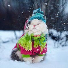 #cat #winter #snow #winter #cute