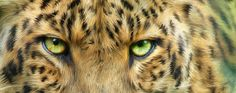 This Leopard has the look...watch out!!!