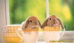 Hare in my mug!