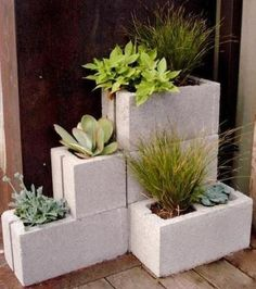 fines herbes dans des cinder blocks jardin urbain chez soi