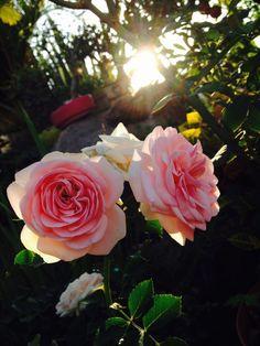 Las flores del verano al atardecer