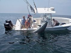 Blue Fin Tuna fighting boat!