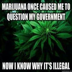 Oh my god think about! Such a good PIONT Marijuana Facts, Medical Marijuana, Cannabis, American Medical Association, Psy Art, Cancer Cure, Smoking Weed, Green Trees, Chronic Pain
